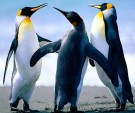 Dance of the Penguins